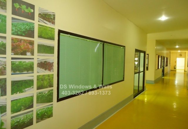 Apple green venetian blinds
